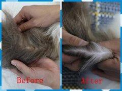 西安时尚CAAC伴侣猫专业级美容洗护培训班(图2)