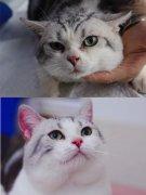 西安时尚CAAC伴侣猫专业级美容洗护培训班(图3)